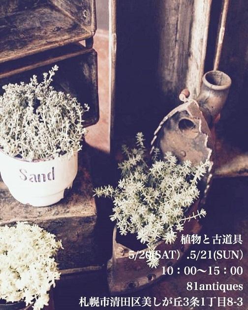 植物と古道具