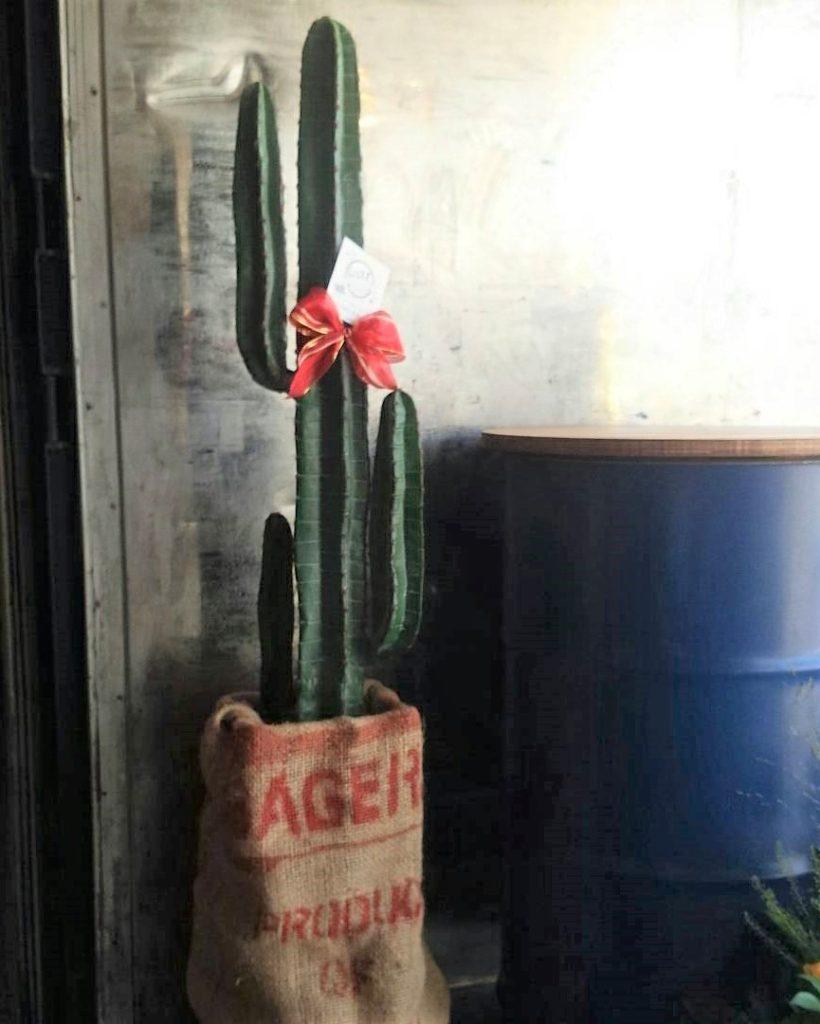mexican-cactus