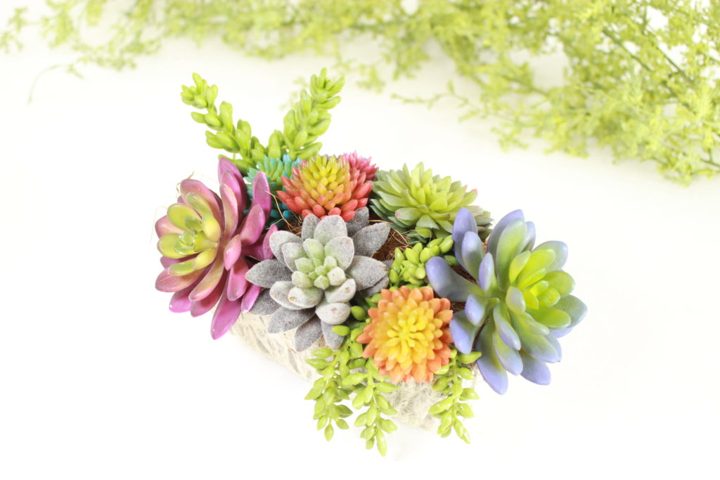 color-succulenten