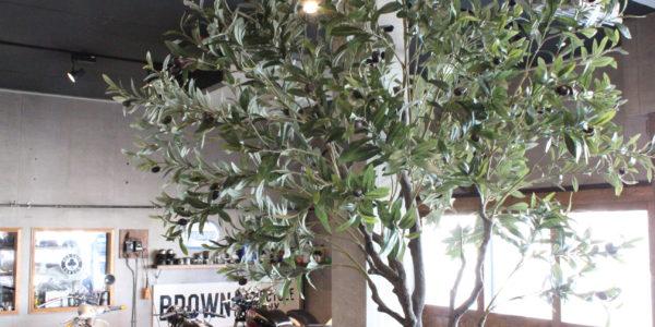 北海道初上陸の観葉植物フェイクグリーンで店舗装飾