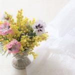 mimosa-pansy
