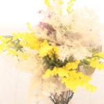 mimosa-and-smoketree