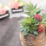 ksama-succulent